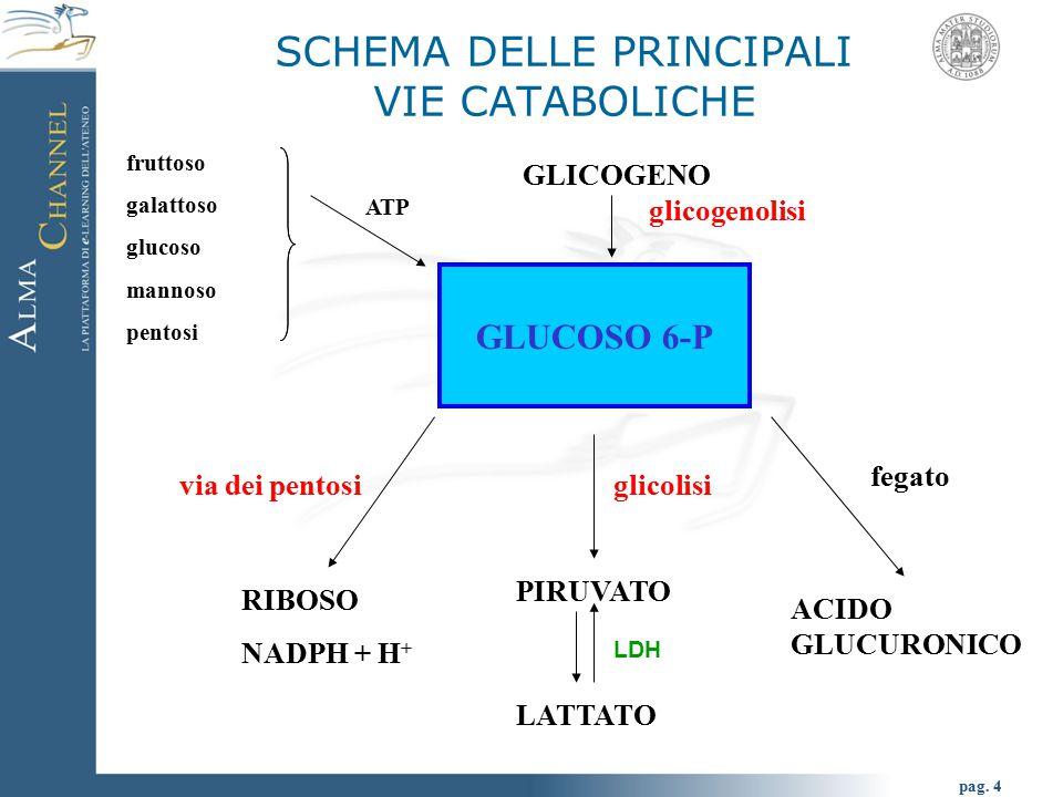pag. 4 SCHEMA DELLE PRINCIPALI VIE CATABOLICHE GLUCOSO 6-P GLICOGENO LDH PIRUVATO RIBOSO NADPH + H + glicogenolisi via dei pentosiglicolisi LATTATO AC