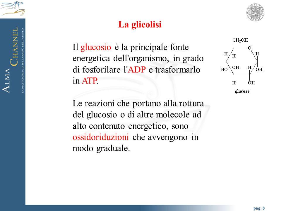 pag. 8 La glicolisi Il glucosio è la principale fonte energetica dell'organismo, in grado di fosforilare l'ADP e trasformarlo in ATP. Le reazioni che
