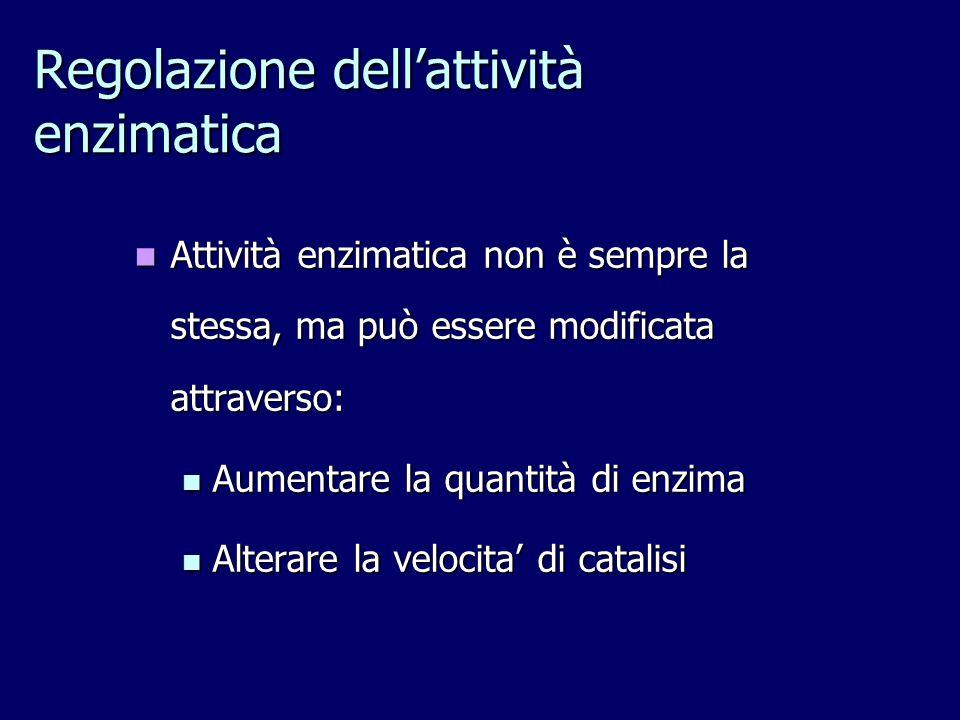 Regolazione dell'attività enzimatica Attività enzimatica non è sempre la stessa, ma può essere modificata attraverso: Attività enzimatica non è sempre