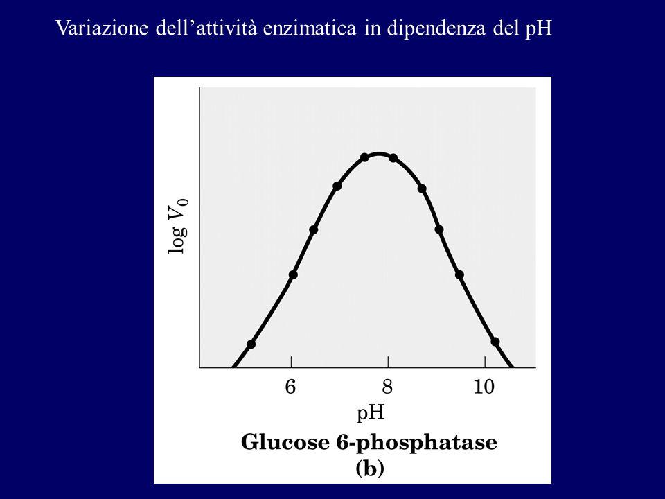 Variazione dell'attività enzimatica in dipendenza del pH