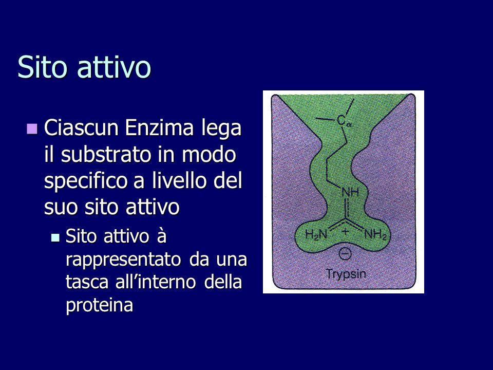 Ciascun Enzima lega il substrato in modo specifico a livello del suo sito attivo Ciascun Enzima lega il substrato in modo specifico a livello del suo