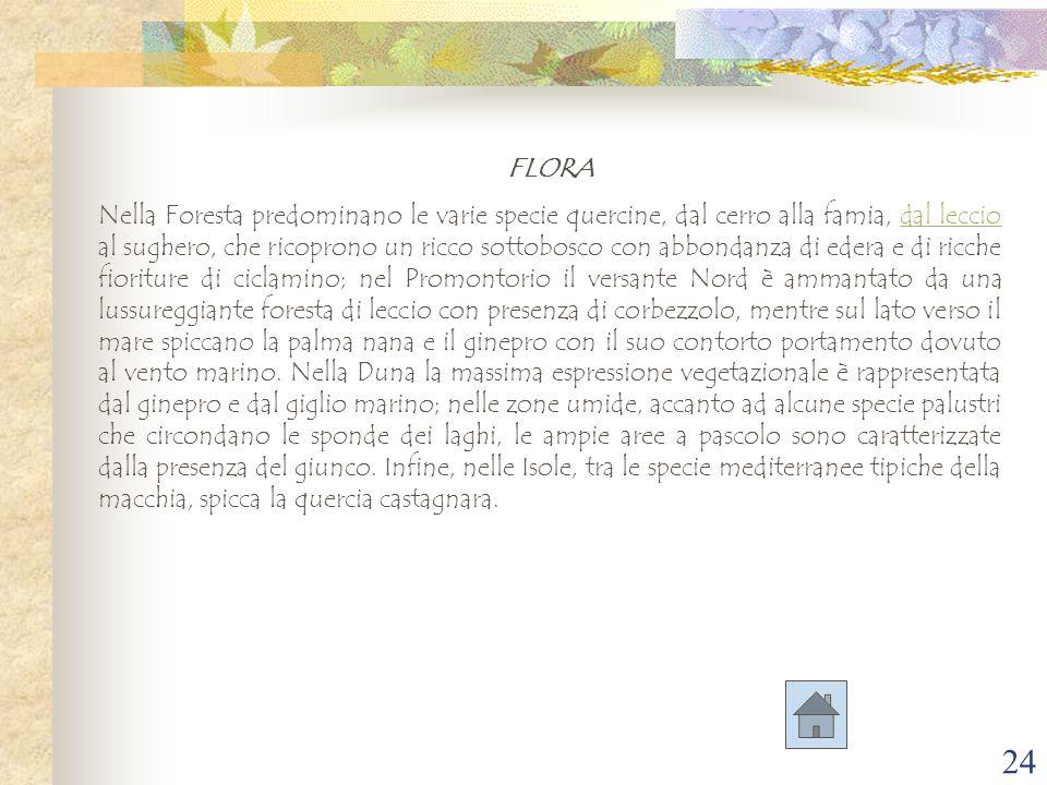 24 FLORA Nella Foresta predominano le varie specie quercine, dal cerro alla famia, dal leccio al sughero, che ricoprono un ricco sottobosco con abbond