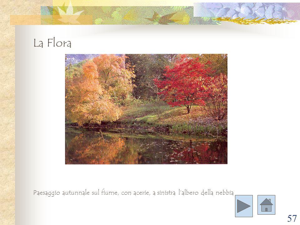 57 La Flora Paesaggio autunnale sul fiume, con acerie, a sinistra l'albero della nebbia