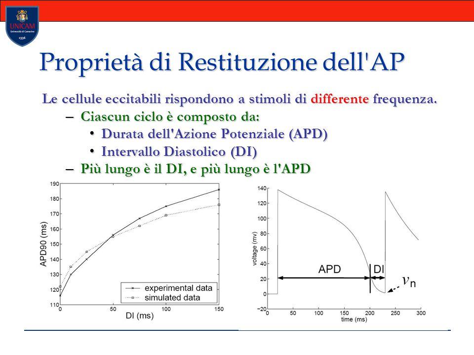 Proprietà di Restituzione dell'AP Le cellule eccitabili rispondono a stimoli di differente frequenza. – Ciascun ciclo è composto da: Durata dell'Azion