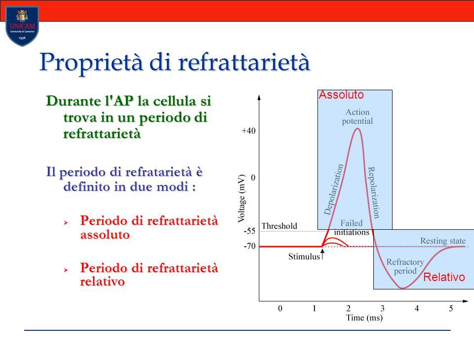Proprietà di refrattarietà Durante l'AP la cellula si trova in un periodo di refrattarietà Il periodo di refratarietà è definito in due modi :  Perio