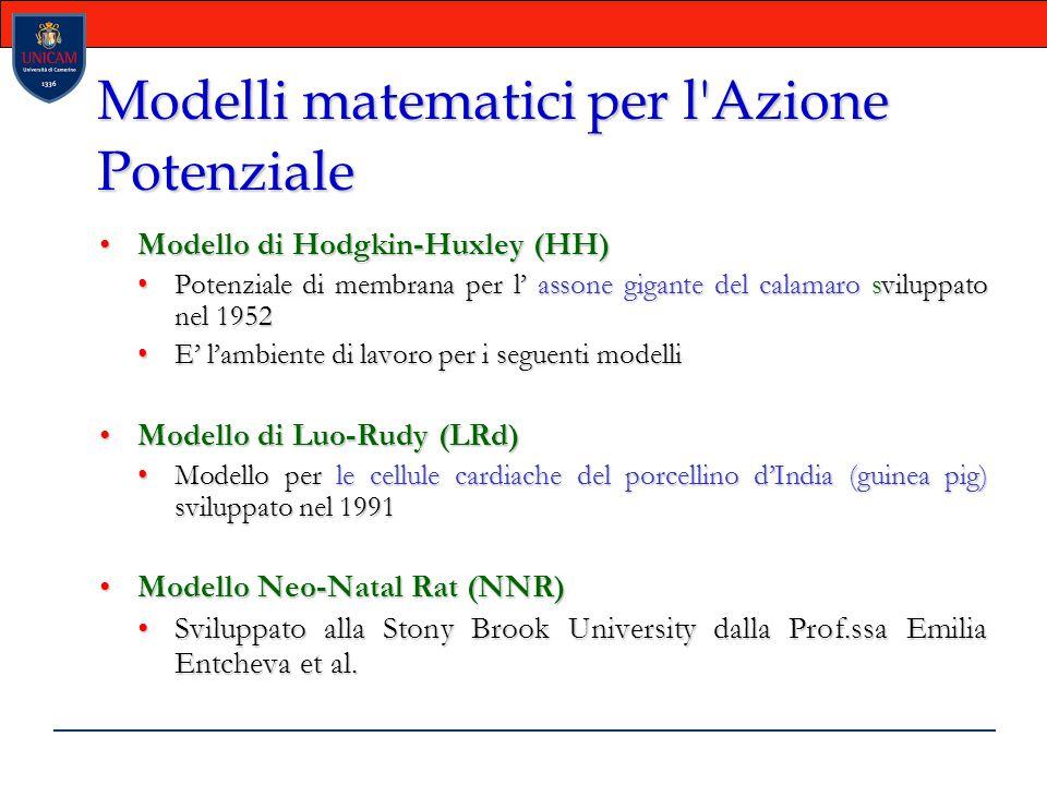 Modelli matematici per l Azione Potenziale Modello di Hodgkin-Huxley (HH)Modello di Hodgkin-Huxley (HH) Potenziale di membrana per l' assone gigante del calamaro sviluppato nel 1952Potenziale di membrana per l' assone gigante del calamaro sviluppato nel 1952 E' l'ambiente di lavoro per i seguenti modelliE' l'ambiente di lavoro per i seguenti modelli Modello di Luo-Rudy (LRd) Modello di Luo-Rudy (LRd)  Modello per le cellule cardiache del porcellino d'India (guinea pig) sviluppato nel 1991Modello per le cellule cardiache del porcellino d'India (guinea pig) sviluppato nel 1991 Modello Neo-Natal Rat (NNR) Modello Neo-Natal Rat (NNR)  Sviluppato alla Stony Brook University dalla Prof.ssa Emilia Entcheva et al.Sviluppato alla Stony Brook University dalla Prof.ssa Emilia Entcheva et al.