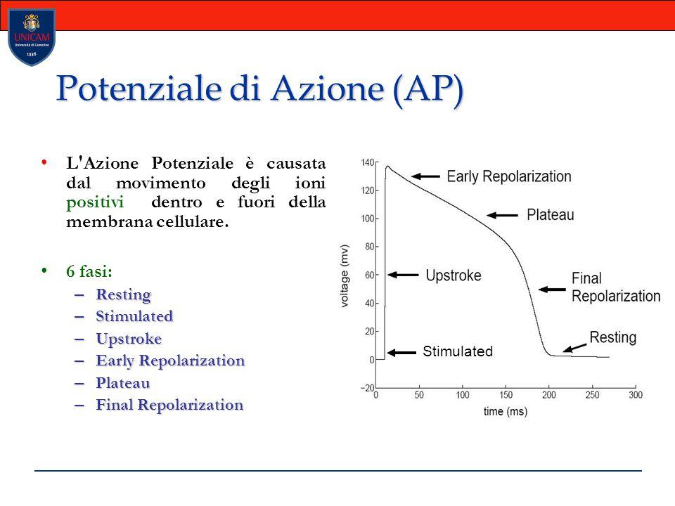 Potenziale di Azione (AP) L'Azione Potenziale è causata dal movimento degli ioni positivi dentro e fuori della membrana cellulare. 6 fasi: – Resting –