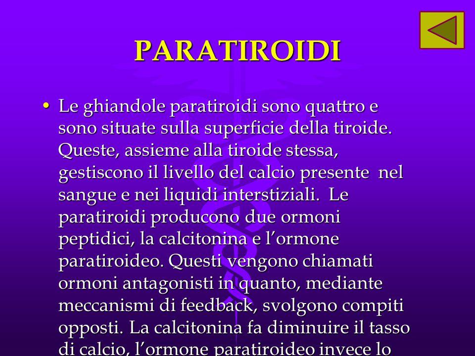 PARATIROIDI Le ghiandole paratiroidi sono quattro e sono situate sulla superficie della tiroide. Queste, assieme alla tiroide stessa, gestiscono il li