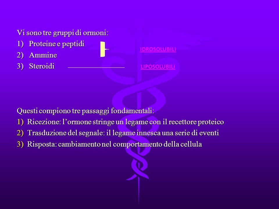 Vi sono tre gruppi di ormoni: 1) Proteine e peptidi 2) Ammine 3) Steroidi Questi compiono tre passaggi fondamentali: 1)Ricezione: l'ormone stringe un