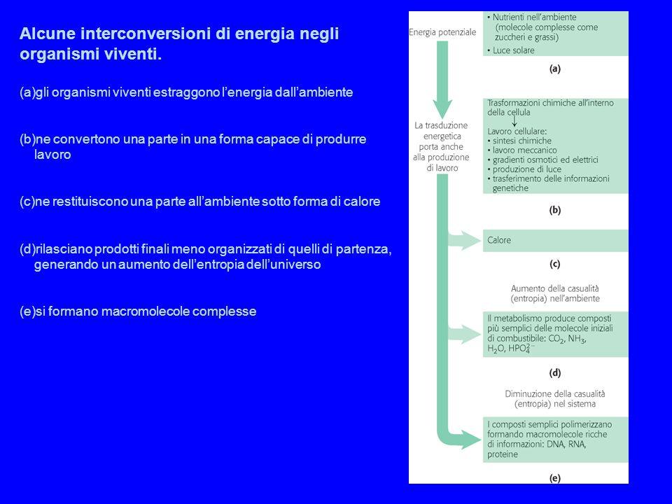 Alcune interconversioni di energia negli organismi viventi. (a)gli organismi viventi estraggono l'energia dall'ambiente (b)ne convertono una parte in