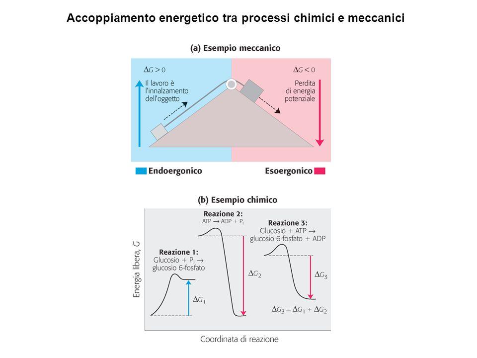 Accoppiamento energetico tra processi chimici e meccanici