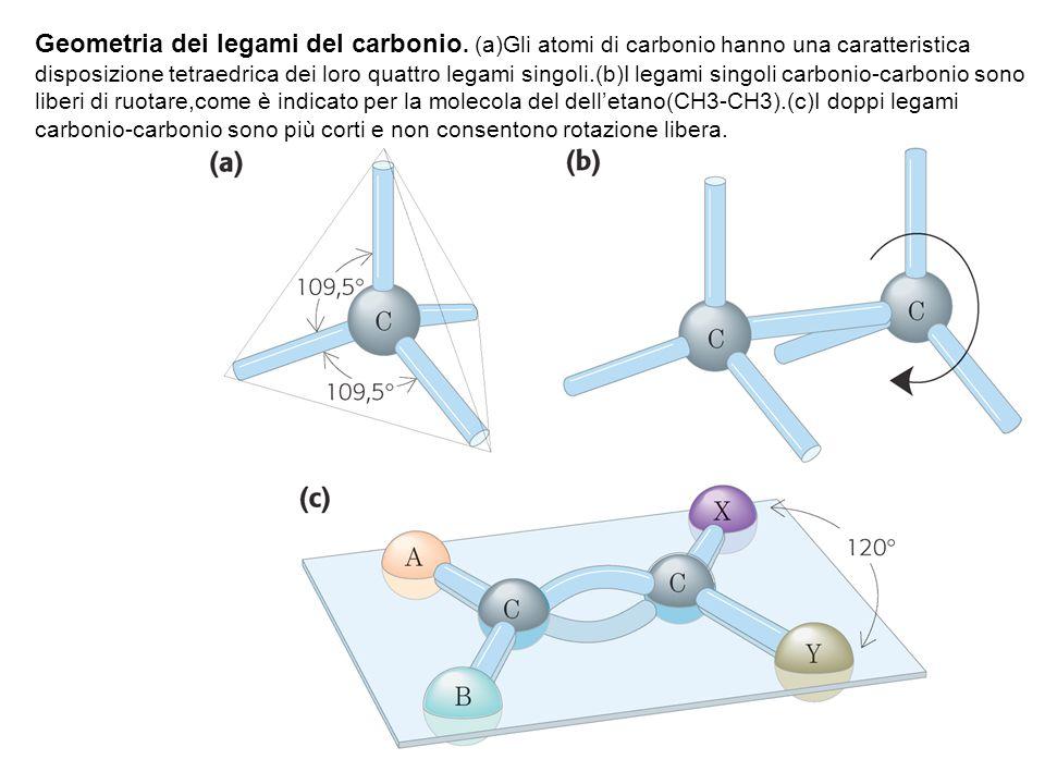 Geometria dei legami del carbonio. (a)Gli atomi di carbonio hanno una caratteristica disposizione tetraedrica dei loro quattro legami singoli.(b)I leg