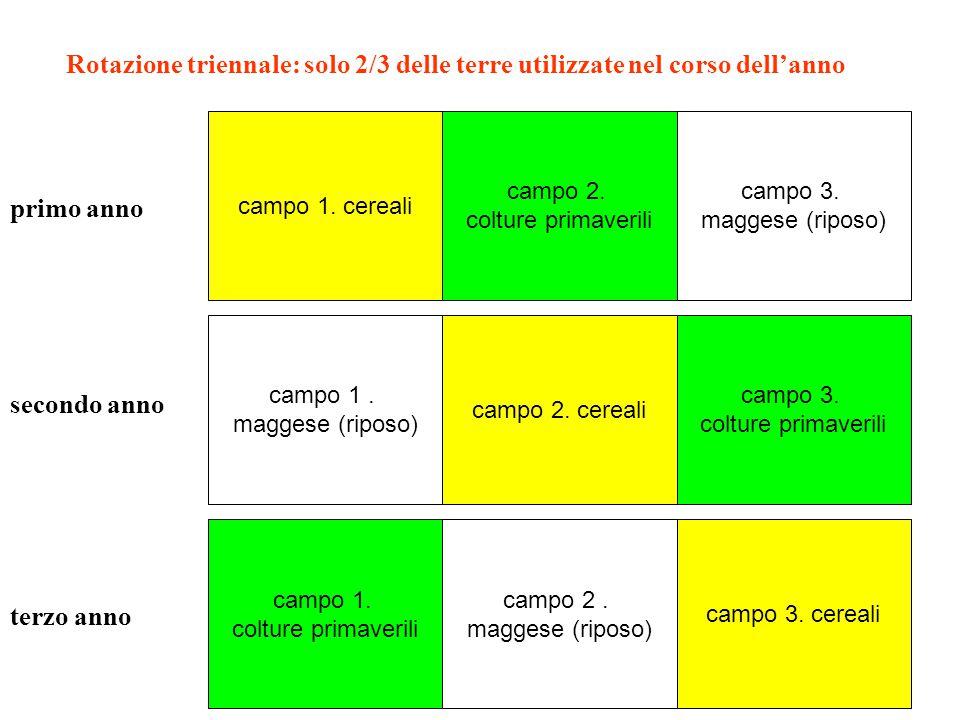 campo 1. cereali campo 2. colture primaverili campo 3. maggese (riposo) primo anno secondo anno terzo anno campo 1. maggese (riposo) campo 2. maggese