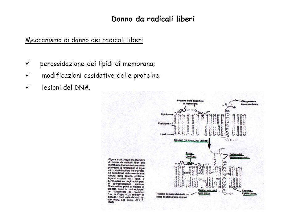Meccanismo di danno dei radicali liberi perossidazione dei lipidi di membrana; modificazioni ossidative delle proteine; lesioni del DNA. Danno da radi