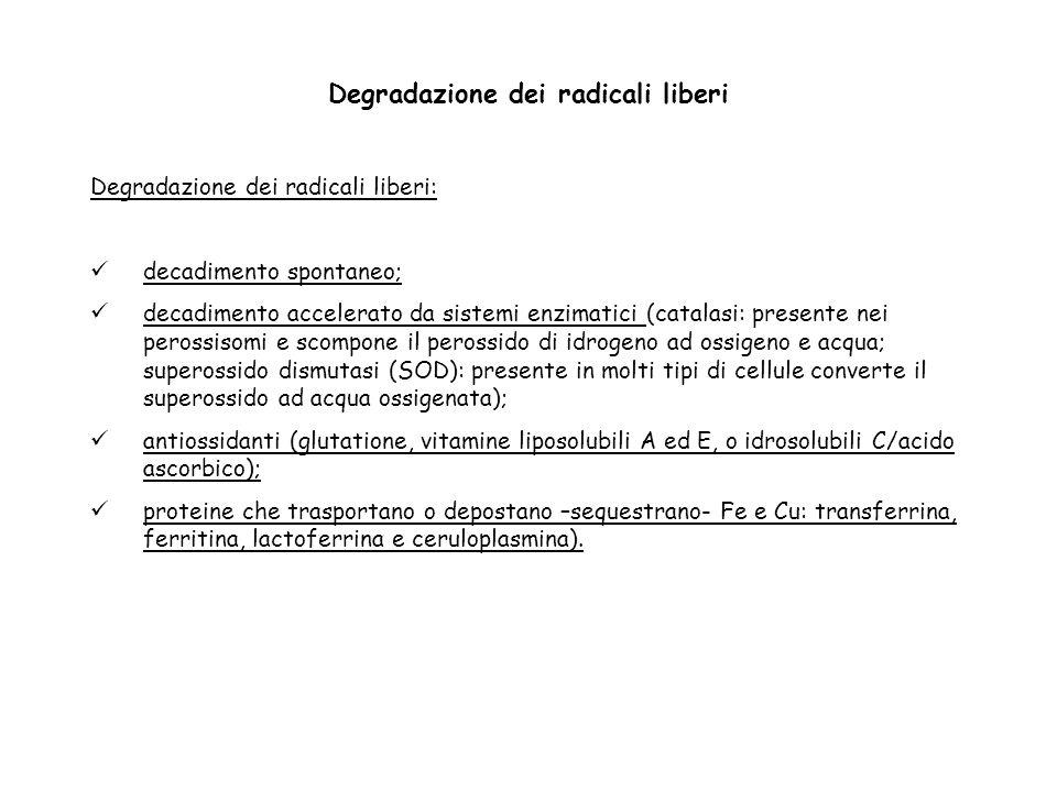 Degradazione dei radicali liberi Degradazione dei radicali liberi: decadimento spontaneo; decadimento accelerato da sistemi enzimatici (catalasi: pres