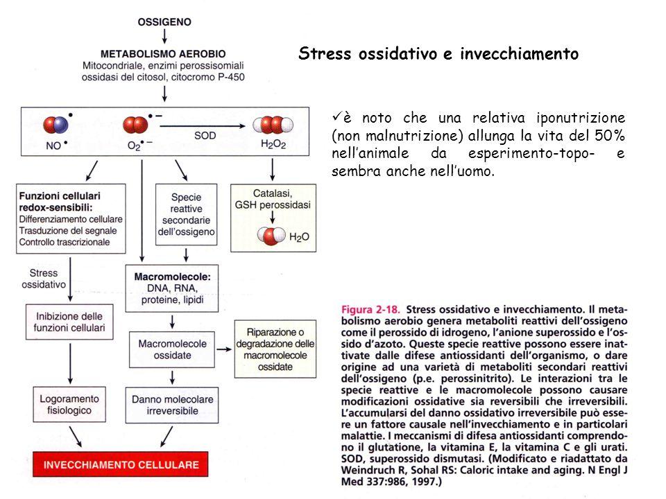Stress ossidativo e invecchiamento è noto che una relativa iponutrizione (non malnutrizione) allunga la vita del 50% nell'animale da esperimento-topo-