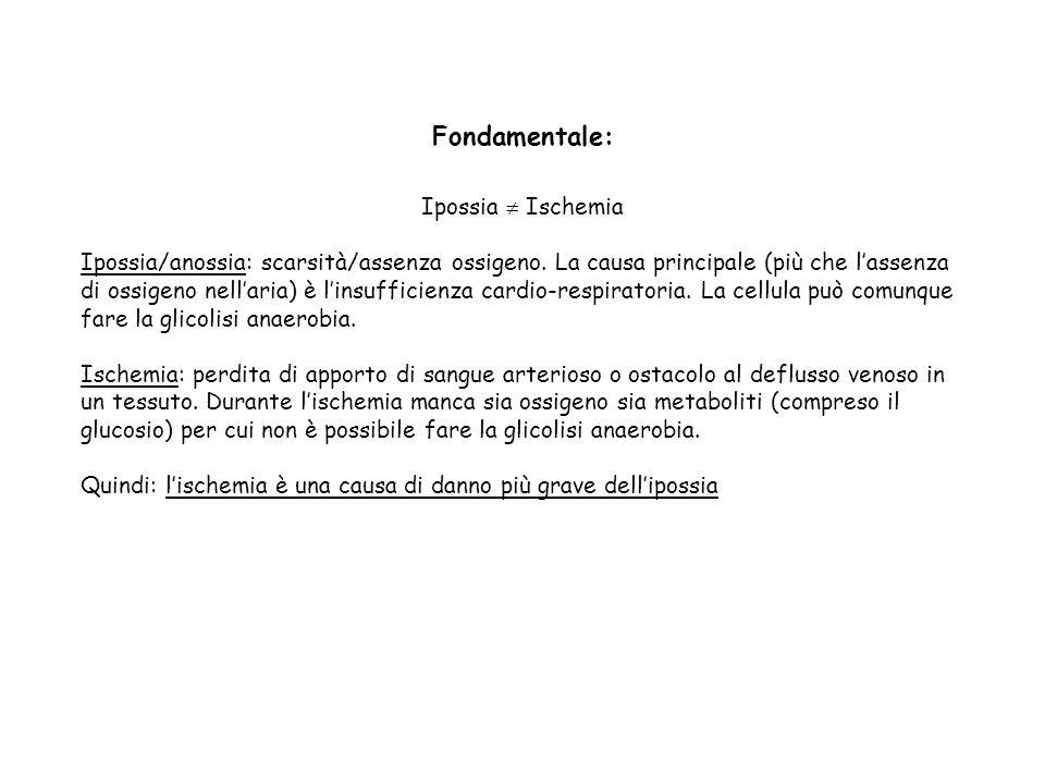 Fondamentale: Ipossia  Ischemia Ipossia/anossia: scarsità/assenza ossigeno. La causa principale (più che l'assenza di ossigeno nell'aria) è l'insuffi