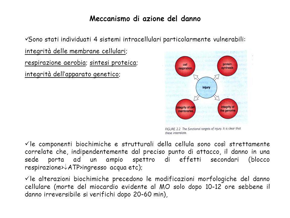 Sono stati individuati 4 sistemi intracellulari particolarmente vulnerabili: integrità delle membrane cellulari; respirazione aerobia; sintesi proteic