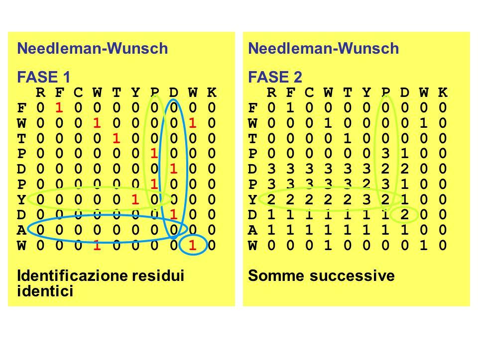 Needleman-Wunsch FASE 1 R F C W T Y P D W K F 0 1 0 0 0 0 0 0 0 0 W 0 0 0 1 0 0 0 0 1 0 T 0 0 0 0 1 0 0 0 0 0 P 0 0 0 0 0 0 1 0 0 0 D 0 0 0 0 0 0 0 1 0 0 P 0 0 0 0 0 0 1 0 0 0 Y 0 0 0 0 0 1 0 0 0 0 D 0 0 0 0 0 0 0 1 0 0 A 0 0 0 0 0 0 0 0 0 0 W 0 0 0 1 0 0 0 0 1 0 Identificazione residui identici Needleman-Wunsch FASE 2 R F C W T Y P D W K F 0 1 0 0 0 0 0 0 0 0 W 0 0 0 1 0 0 0 0 1 0 T 0 0 0 0 1 0 0 0 0 0 P 0 0 0 0 0 0 3 1 0 0 D 3 3 3 3 3 3 2 2 0 0 P 3 3 3 3 3 2 3 1 0 0 Y 2 2 2 2 2 3 2 1 0 0 D 1 1 1 1 1 1 1 2 0 0 A 1 1 1 1 1 1 1 1 0 0 W 0 0 0 1 0 0 0 0 1 0 Somme successive