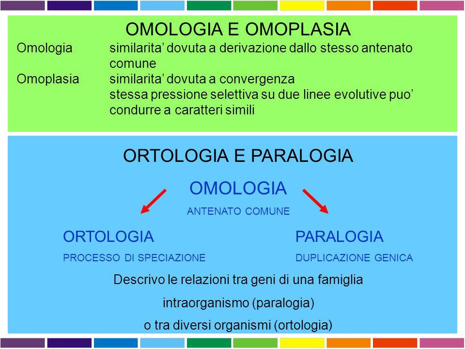 OMOLOGIA E OMOPLASIA Omologia similarita' dovuta a derivazione dallo stesso antenato comune Omoplasia similarita' dovuta a convergenza stessa pressione selettiva su due linee evolutive puo' condurre a caratteri simili ORTOLOGIA E PARALOGIA OMOLOGIA ANTENATO COMUNE ORTOLOGIAPARALOGIA PROCESSO DI SPECIAZIONEDUPLICAZIONE GENICA Descrivo le relazioni tra geni di una famiglia intraorganismo (paralogia) o tra diversi organismi (ortologia )