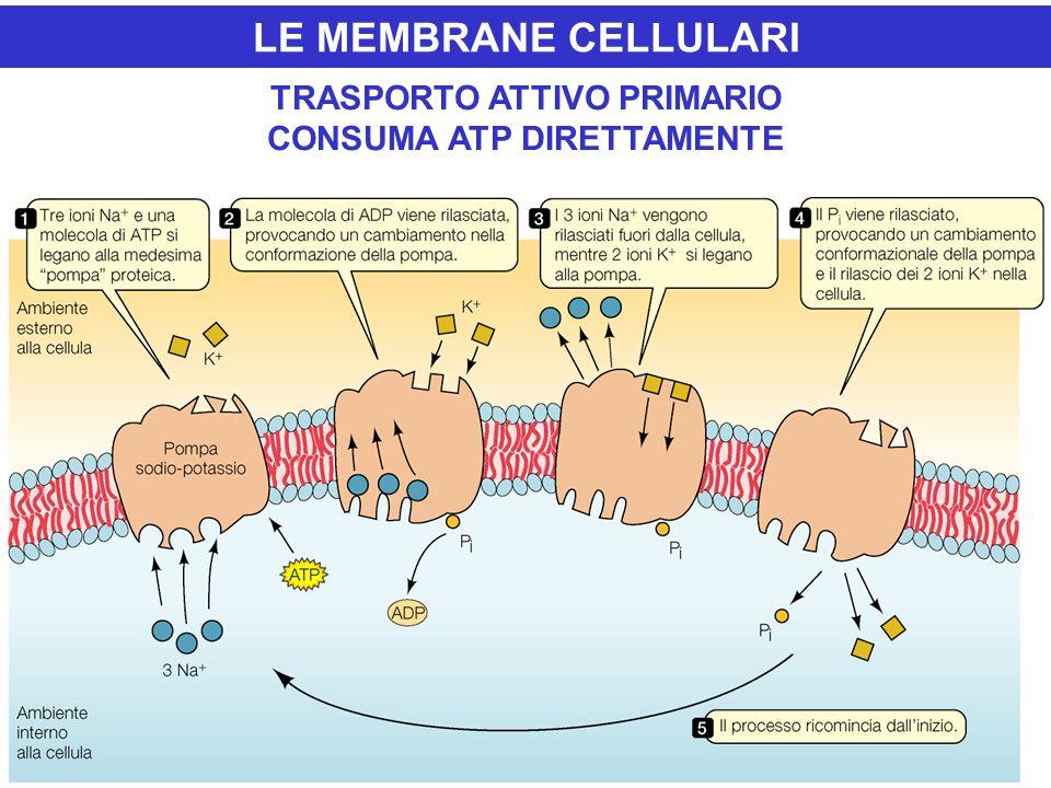 LE MEMBRANE CELLULARI TRASPORTO ATTIVO PRIMARIO CONSUMA ATP DIRETTAMENTE