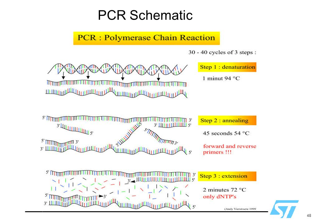 48 PCR Schematic Used with permission.