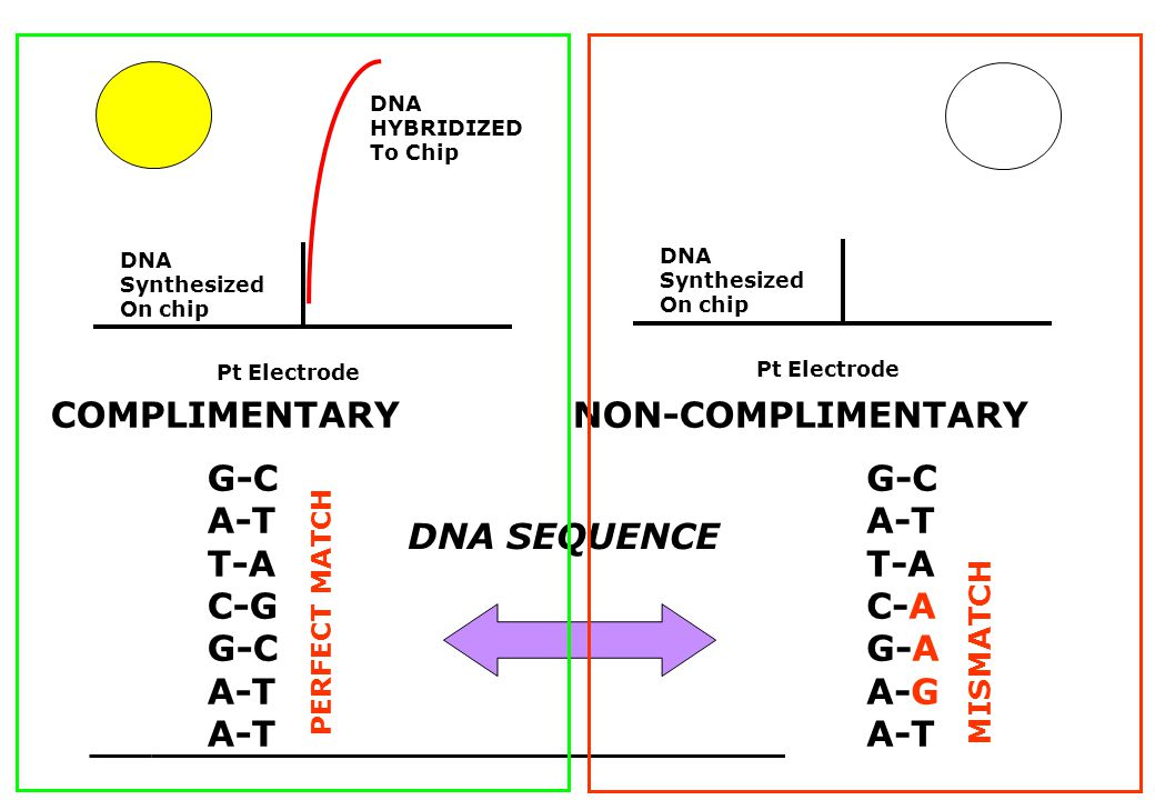 55 Pt Electrode DNA Synthesized On chip Pt Electrode DNA Synthesized On chip DNA HYBRIDIZED To Chip COMPLIMENTARY NON-COMPLIMENTARY G-C A-T T-A C-G G-