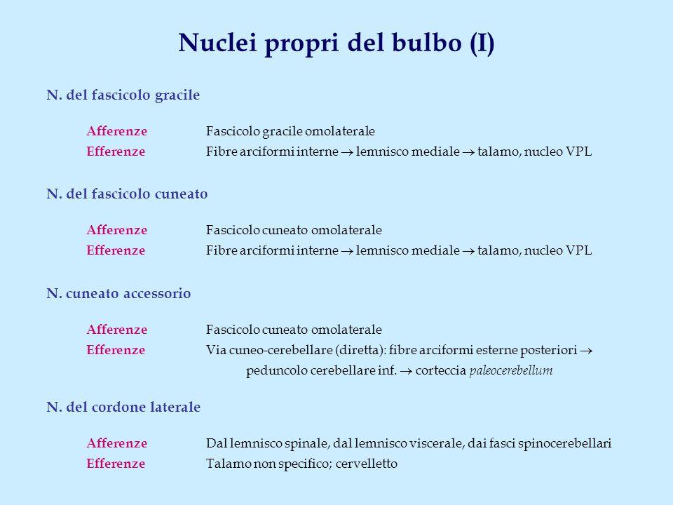 Nuclei propri del bulbo (I) N. del fascicolo gracile Afferenze Fascicolo gracile omolaterale Efferenze Fibre arciformi interne  lemnisco mediale  ta
