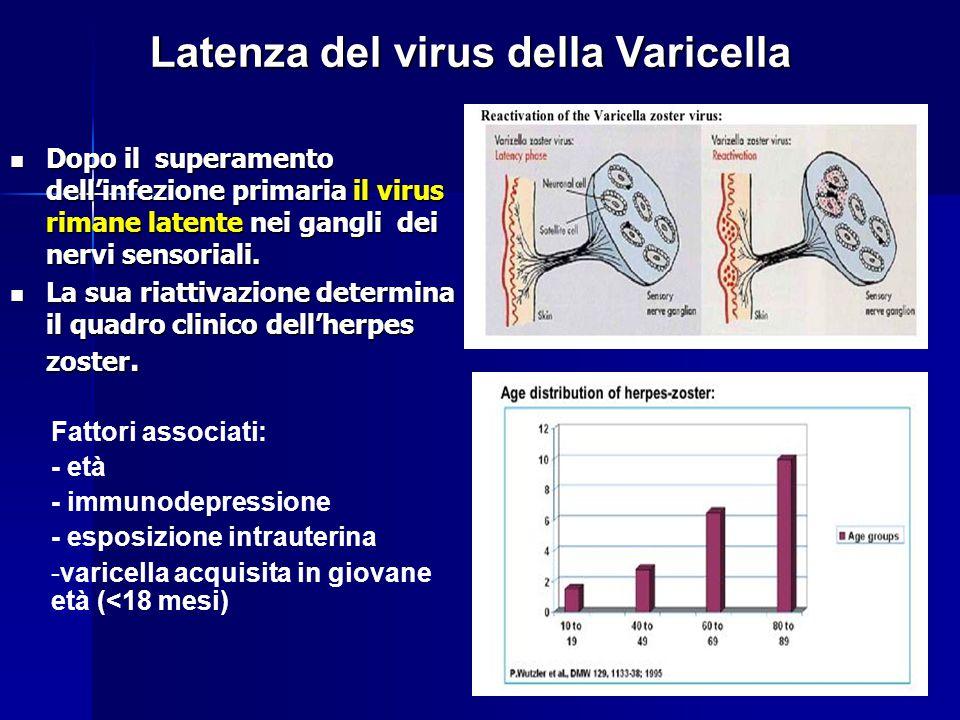 Latenza del virus della Varicella Dopo il superamento dell'infezione primaria il virus rimane latente nei gangli dei nervi sensoriali. Dopo il superam