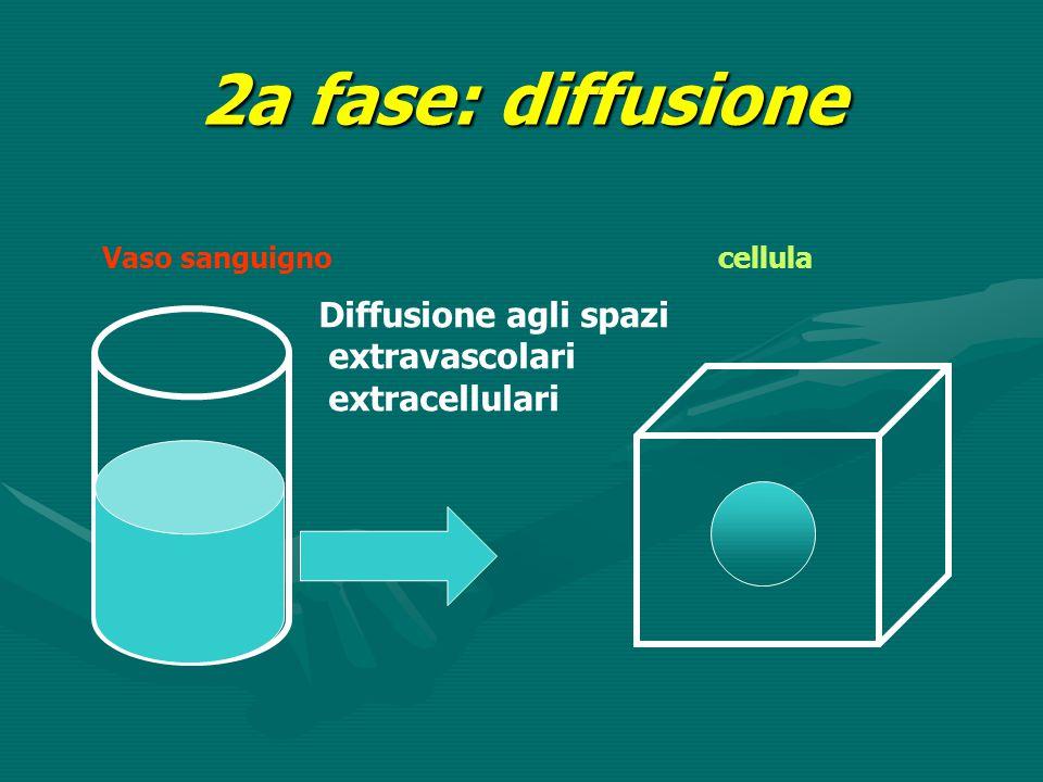 2a fase: diffusione Diffusione agli spazi extravascolari extracellulari Vaso sanguignocellula