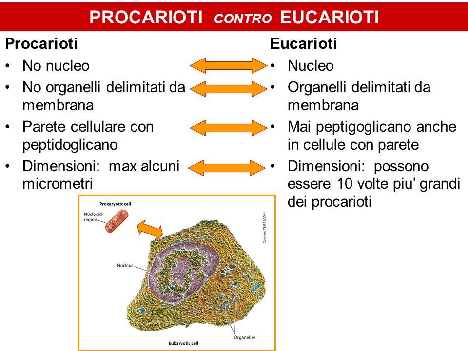 PROCARIOTI CONTRO EUCARIOTI Procarioti No nucleo No organelli delimitati da membrana Parete cellulare con peptidoglicano Dimensioni: max alcuni micrometri Eucarioti Nucleo Organelli delimitati da membrana Mai peptigoglicano anche in cellule con parete Dimensioni: possono essere 10 volte piu' grandi dei procarioti