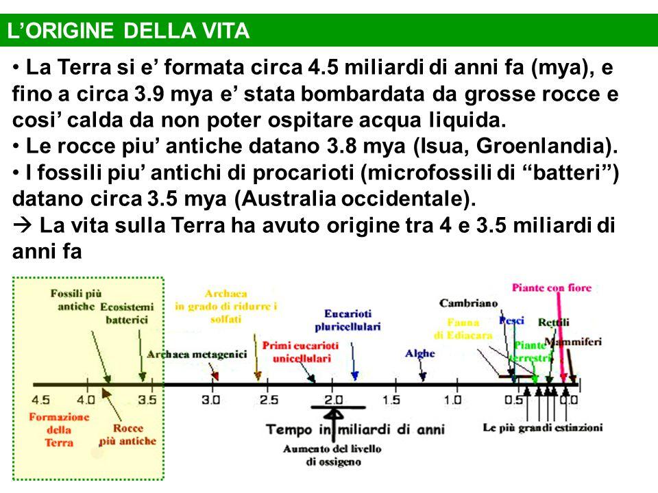 La Terra si e' formata circa 4.5 miliardi di anni fa (mya), e fino a circa 3.9 mya e' stata bombardata da grosse rocce e cosi' calda da non poter ospi