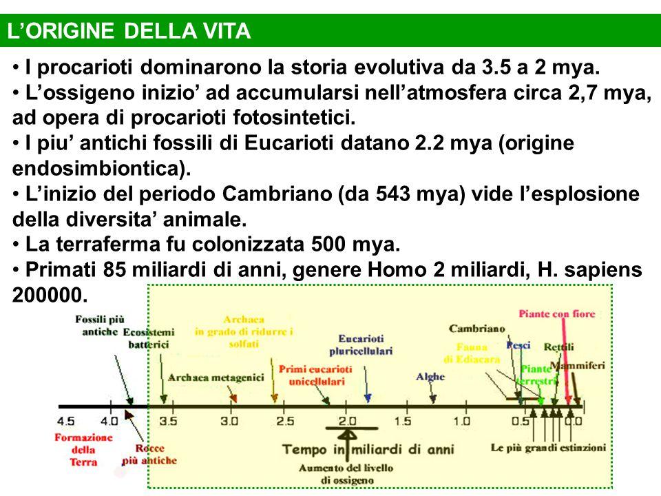 I procarioti dominarono la storia evolutiva da 3.5 a 2 mya. L'ossigeno inizio' ad accumularsi nell'atmosfera circa 2,7 mya, ad opera di procarioti fot