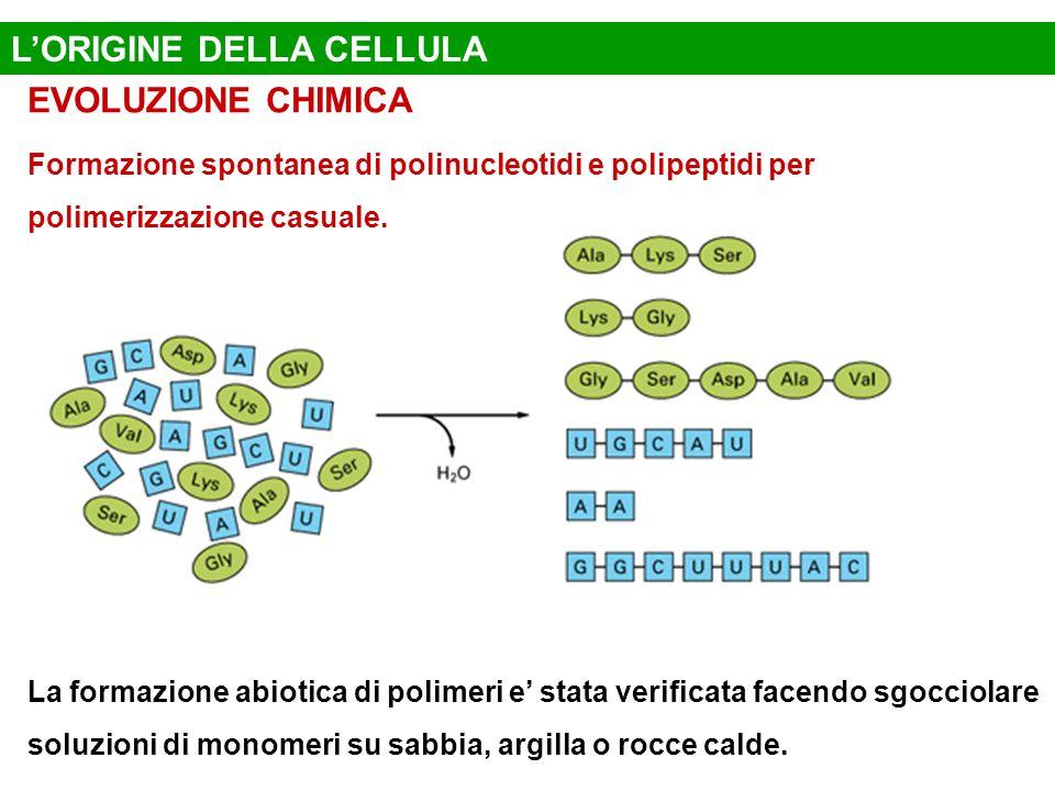 L'ORIGINE DELLA CELLULA EVOLUZIONE CHIMICA Formazione spontanea di polinucleotidi e polipeptidi per polimerizzazione casuale.