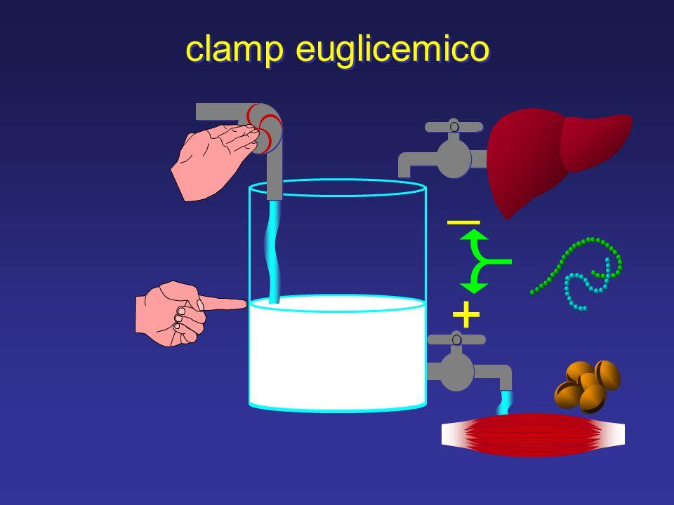 clamp euglicemico _ +
