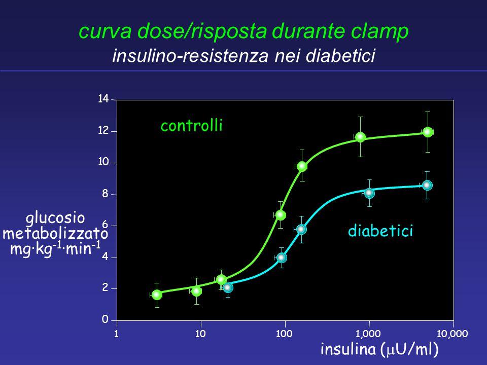 0 2 4 6 8 10 12 14 1101001,00010,000 insulina (  U/ml) glucosio metabolizzato mg·kg -1 ·min -1 controlli diabetici curva dose/risposta durante clamp insulino-resistenza nei diabetici