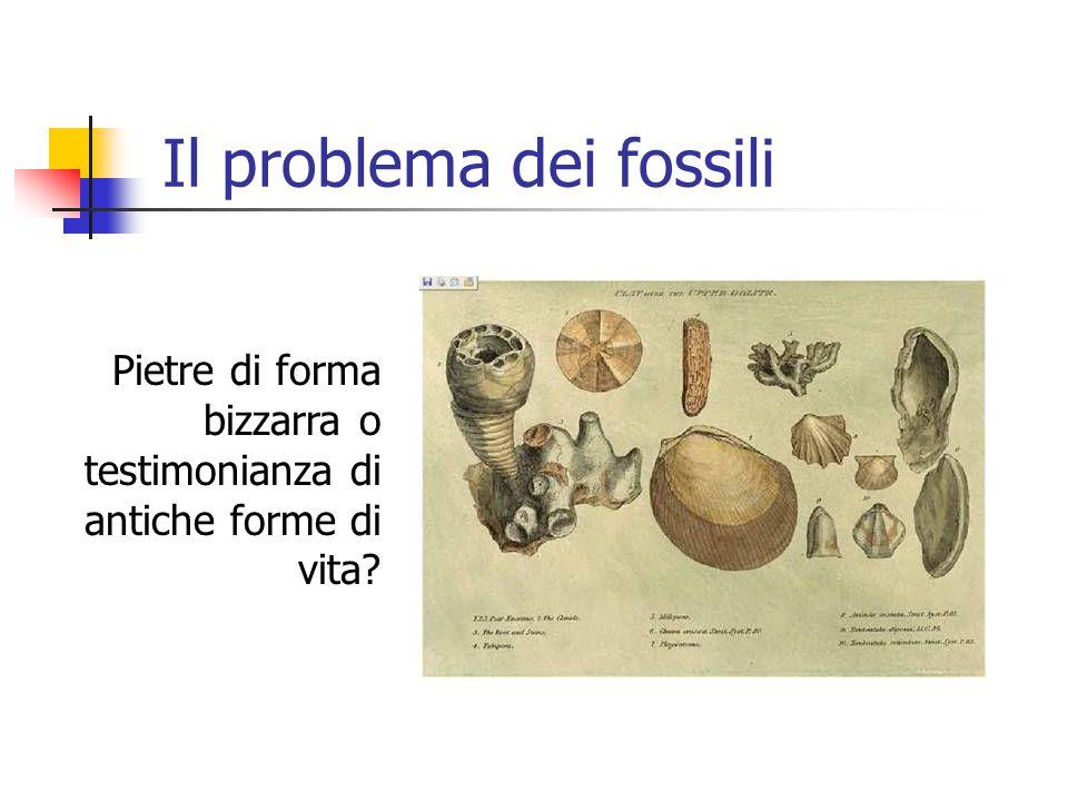 Il problema dei fossili Pietre di forma bizzarra o testimonianza di antiche forme di vita?