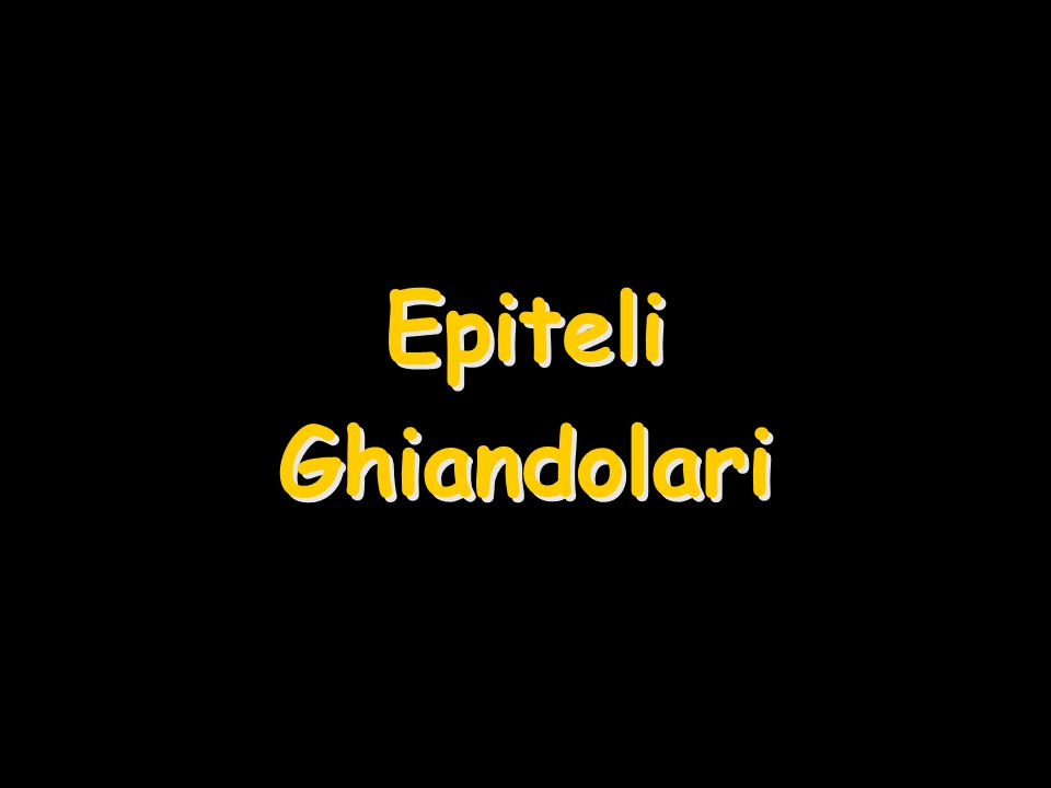 Epiteli Ghiandolari