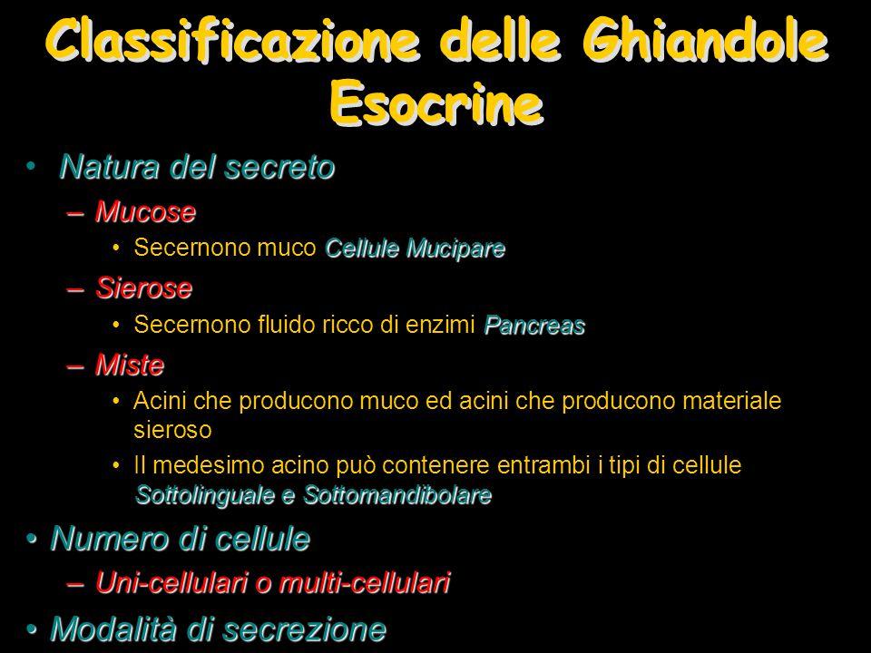 Classificazione delle Ghiandole Esocrine Natura del secreto –Mucose Cellule MucipareSecernono muco Cellule Mucipare –Sierose PancreasSecernono fluido