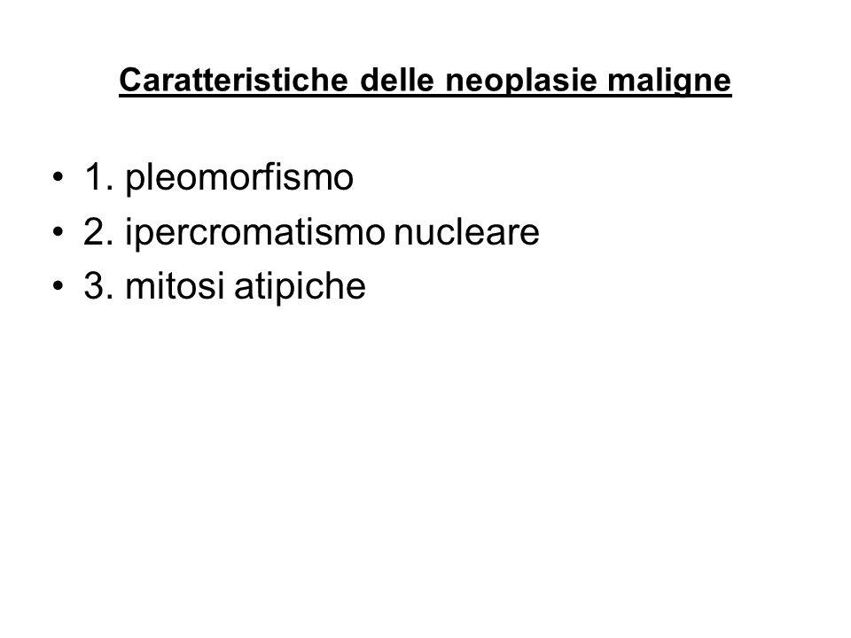 Caratteristiche delle neoplasie maligne 1. pleomorfismo 2. ipercromatismo nucleare 3. mitosi atipiche