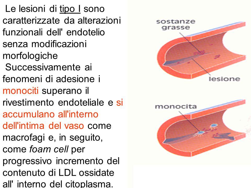 Le lesioni di tipo I sono caratterizzate da alterazioni funzionali dell' endotelio senza modificazioni morfologiche Successivamente ai fenomeni di ade
