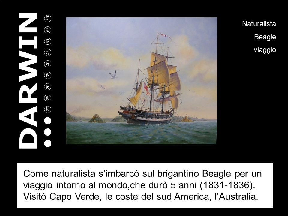 5 10 15 20 25 30 35 40 45 50 55 60 Naturalista Beagle viaggio Come naturalista s'imbarcò sul brigantino Beagle per un viaggio intorno al mondo,che durò 5 anni (1831-1836).