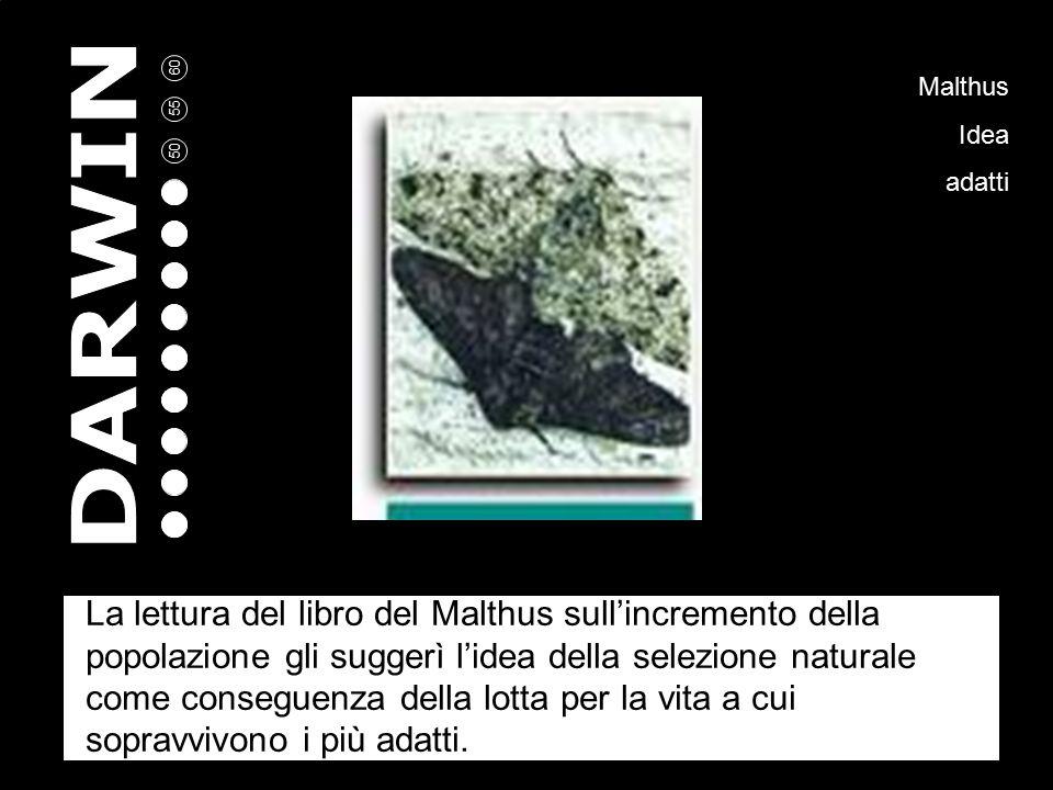 La lettura del libro del Malthus sull'incremento della popolazione gli suggerì l'idea della selezione naturale come conseguenza della lotta per la vita a cui sopravvivono i più adatti.