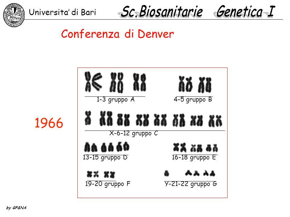 1966 Universita' di Bari 1-3 gruppo A4-5 gruppo B X-6-12 gruppo C 13-15 gruppo D 16-18 gruppo E 19-20 gruppo FY-21-22 gruppo G by GP&NA Conferenza di Denver