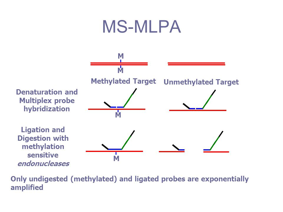 Unmethylated Target M M Methylated Target Denaturation and Multiplex probe hybridization M Only undigested (methylated) and ligated probes are exponen