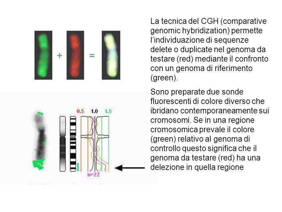 La tecnica del CGH (comparative genomic hybridization) permette l'individuazione di sequenze delete o duplicate nel genoma da testare (red) mediante i