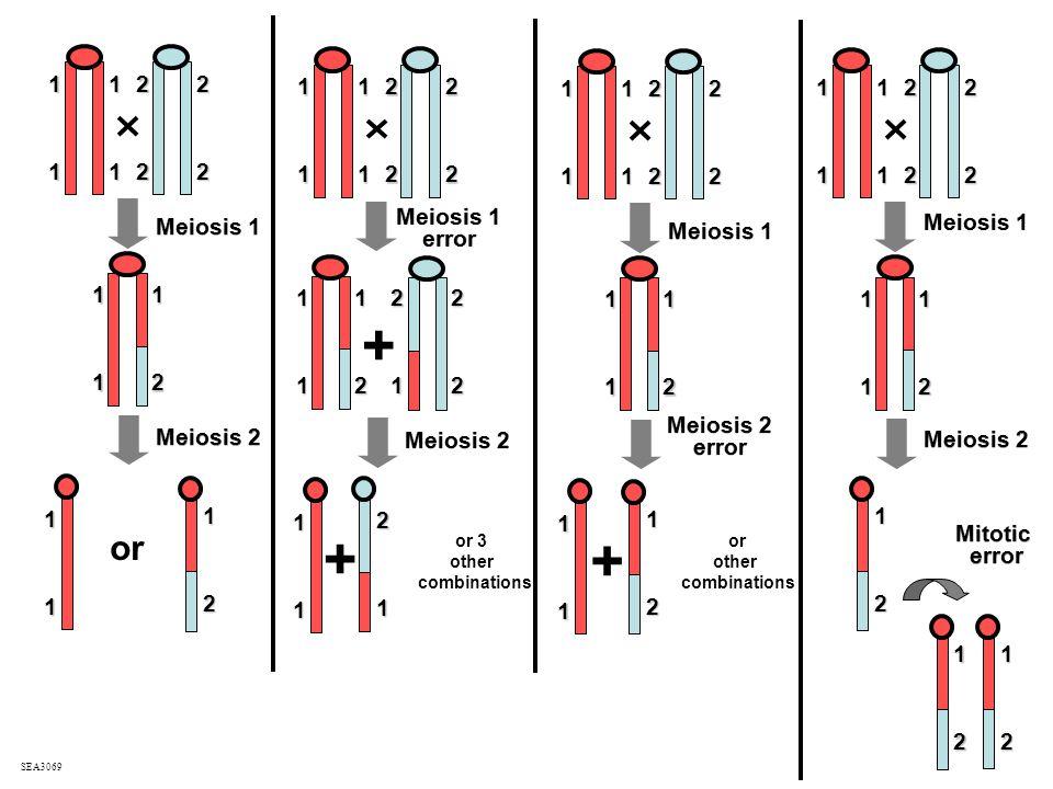 + Meiosis 1 Meiosis 2 or + SEA3069 11 11 22 22 1 1 1 2 1 1 1 2 Meiosis 1 error Meiosis 1 error Meiosis 2 11 11 22 22 1 1 1 2 1 1 2 1 2 2 2 1 or 3 othe