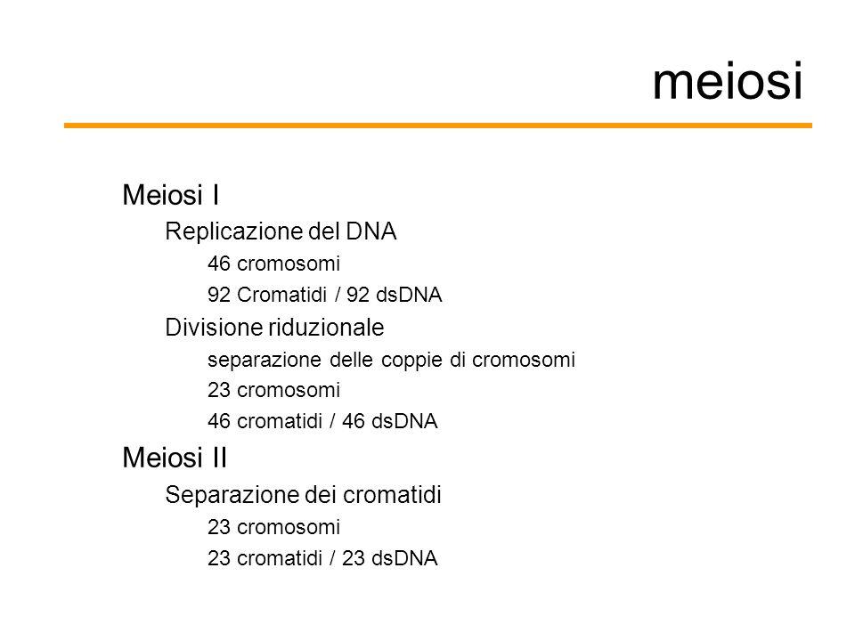 meiosi Meiosi I Replicazione del DNA 46 cromosomi 92 Cromatidi / 92 dsDNA Divisione riduzionale separazione delle coppie di cromosomi 23 cromosomi 46