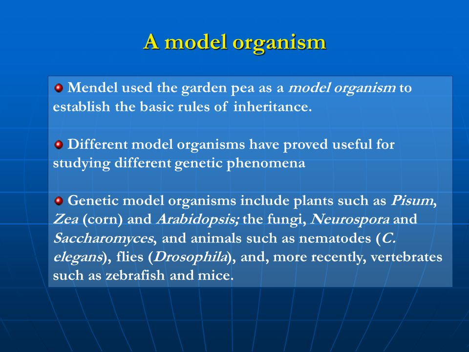 Mendel used the garden pea as a model organism to establish the basic rules of inheritance. Different model organisms have proved useful for studying