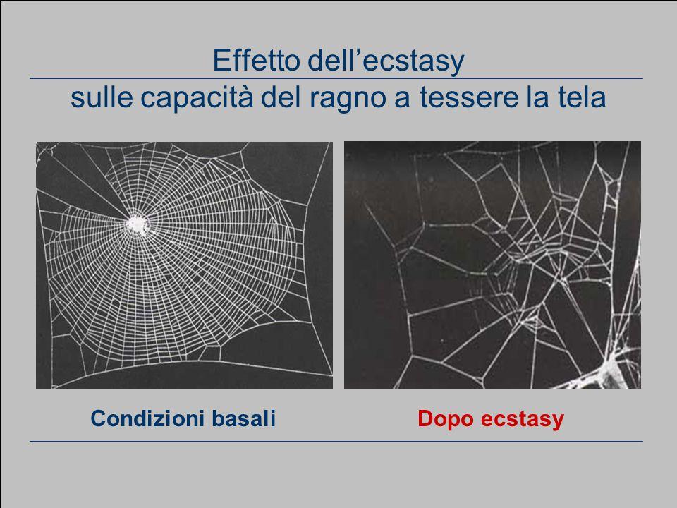 www.apel-pediatri.it aferrand@fastwebnet.it 60 Effetto dell'ecstasy sulle capacità del ragno a tessere la tela Dopo ecstasyCondizioni basali